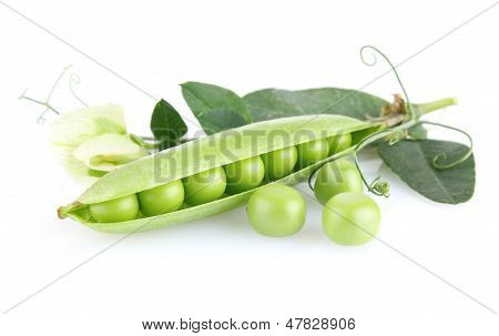 Green Pea With Leaves And Flower
