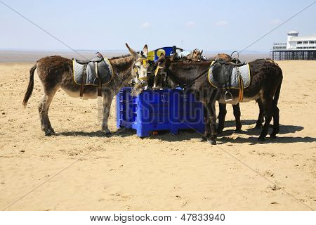 Beach Donkeys