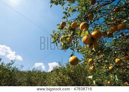 Orange Farm