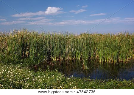 Florida Marshland Pool