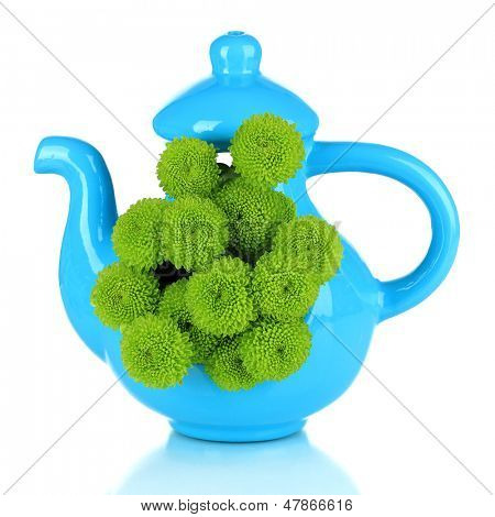 Beautiful green chrysanthemum in vase-teapot isolated on white