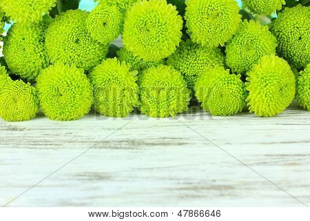 Beautiful green chrysanthemum on table close-up