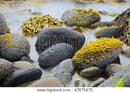 green algae or seaweed on boulders at rocky shore of wild coastline nature detail coast landscape background