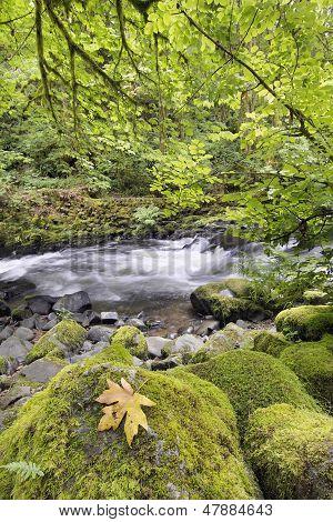 Rushing Water With Rocks At Cedar Creek Washington State