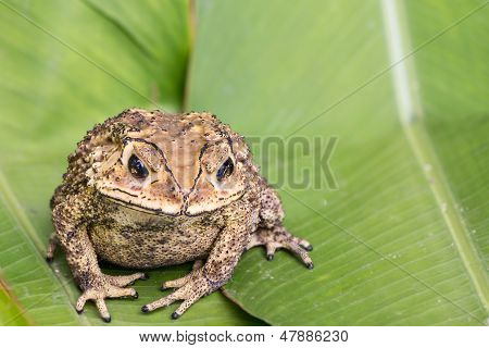 Toad on green leaves