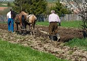 stock photo of horse plowing  - Two men plowing the land with horses - JPG