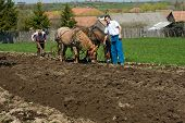 pic of horse plowing  - Resting on the land during the plow - JPG