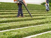 stock photo of blowers  - Landscape Gardener operates gas powered leaf blower - JPG