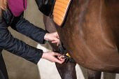 image of pony  - Detail view of girl saddling her brown pony  - JPG