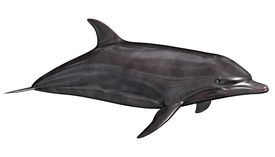 pic of cetacea  - Beautiful quiet dolphin swimming in white background - JPG