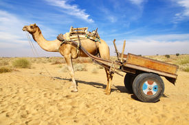 stock photo of camel-cart  - Landscape with Camel in Bikaner - JPG