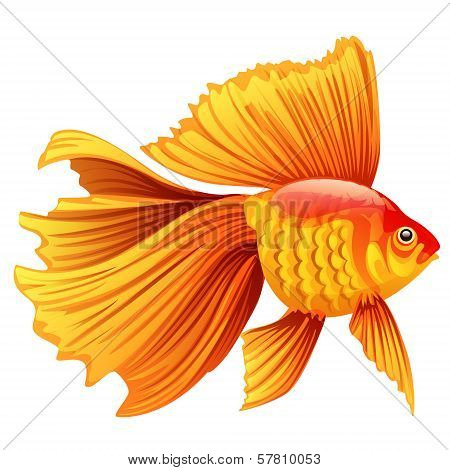 Vector Illustration Of A Goldfish