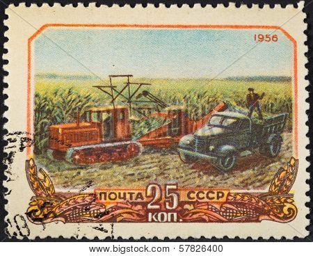 Harvesting Corn In Soviet Russia
