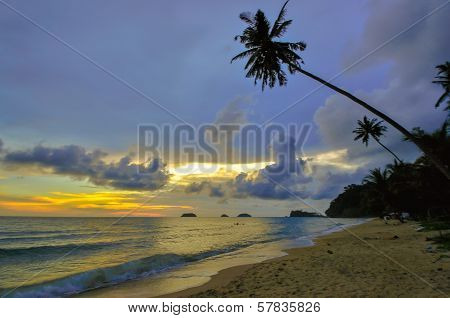 Koh Chang Beach Tilted Coconut Tree, Thailand