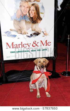 Atmosphere   at Los Angeles Premiere of 'Marley and Me'. Mann Village Theater, Los Angeles, CA. 12-11-08