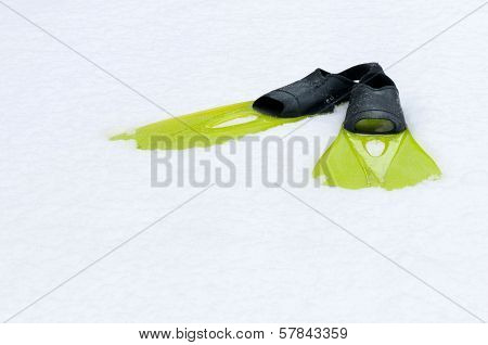 Flippers lying on the snow