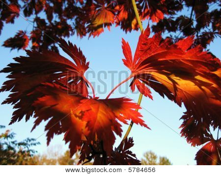 Fall leaves on fire with color
