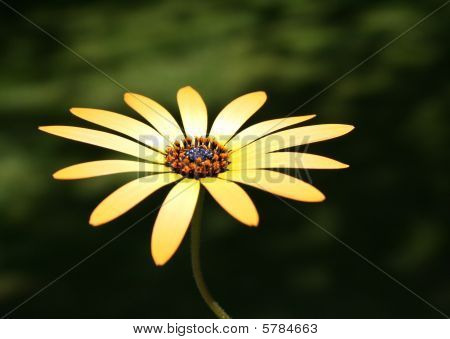 One yellow flower alone in the sunlight