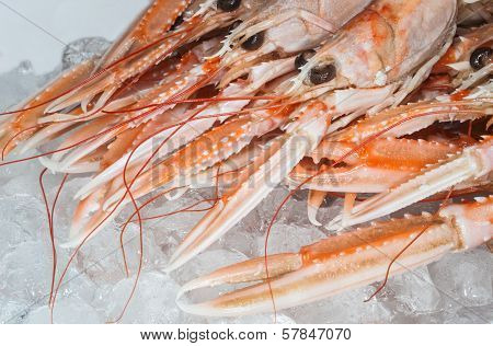 fresh dublin bay prawns