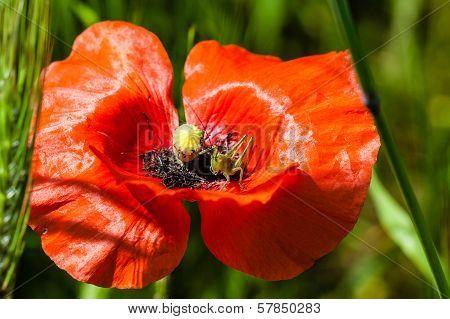 Poppy And Cricket