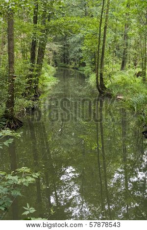 Spree Forest In Germany