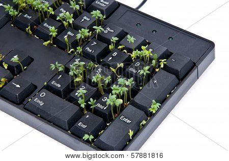 Keyboard With Garden Cress