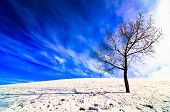 stock photo of wispy  - A single deciduous leafless tree in winter on a snowy hill in late evening with long shadows and big blue sky with wispy clouds behind - JPG
