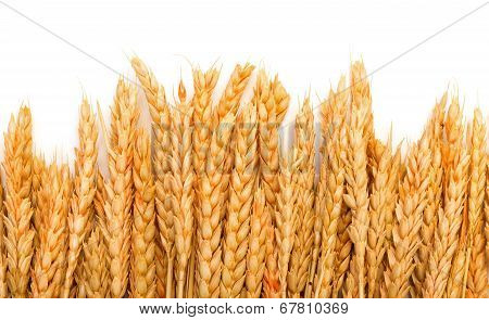 Sheaf Golden Wheat Ears