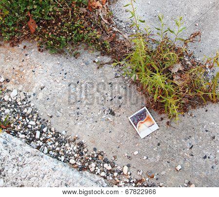 Old Polaroid On Ground