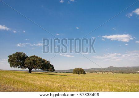 Dehesa Landscape