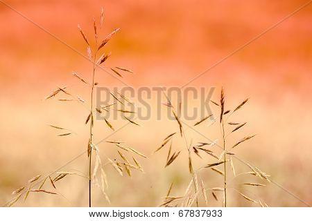 Stalks Of Grass