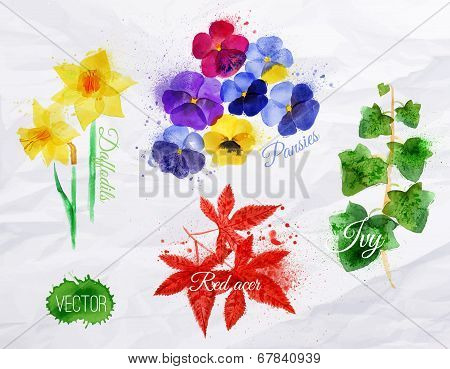 Flower grass daffodils, pansies, ivy, red acer