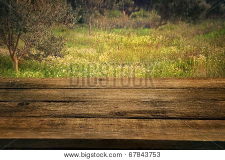 Olive Grove With Wood Table