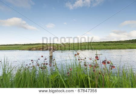 Man fishing for salmon in a beautiful surrounding, wild flowers in the foreground