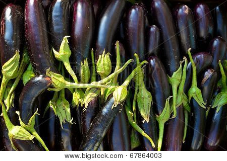 Texture Eggplant Black