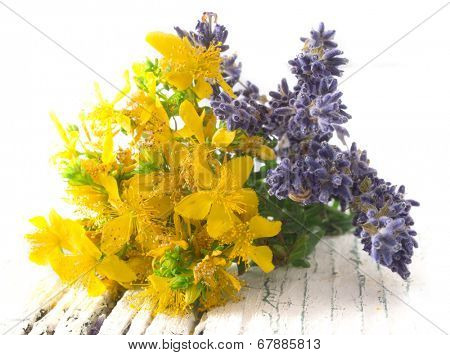 st john's wort and lavender flowers