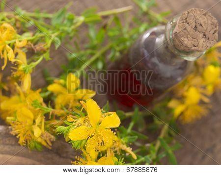 St John's wort flower, healing plant