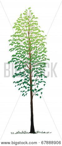 Free Hand Drawing Tree