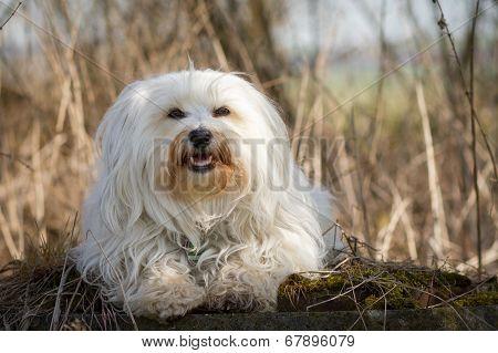 Dog On Moss