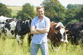 picture of working animal  - Portrait Of Dairy Farmer In Field With Cattle