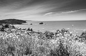 picture of klamath  - California Coastline. Beach near the Klamath are in the Redwood National and State Parks Humbolt County