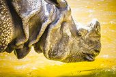 stock photo of rhino  - Indian rhino with huge horn and armor skin - JPG