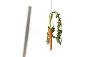 pic of dangling a carrot  - Shadow of a stick and carrot hanging on a string on a white background as a concept of double motivation - JPG