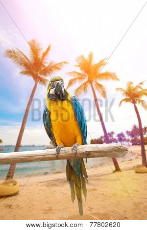 Beautiful macaws perched on a wooden post enjoying the warmth of the evening sun by the beach