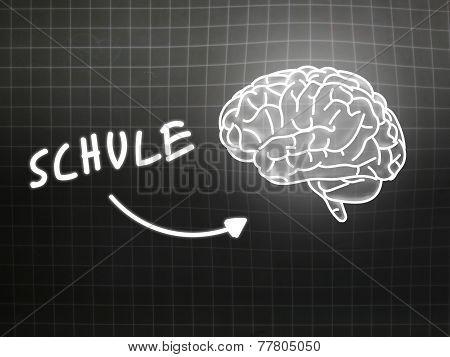 Schule Brain Background Knowledge Science Blackboard Gray