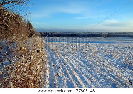 Snowy Dotted Field On Winter Landscape