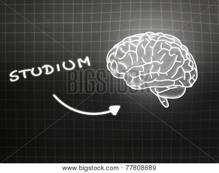 Studium Brain Background Knowledge Science Blackboard Gray