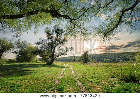 Country  road in summer forest