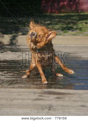Dog Shake 4