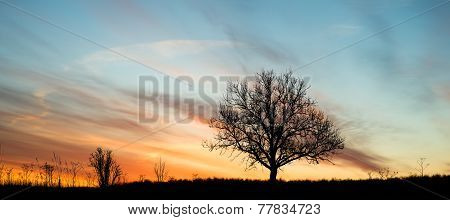 Dawn Single Tree Silhouette